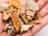 5种中药抵御脂肪肝