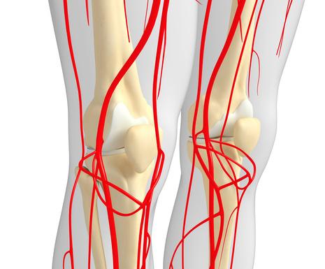 手腕解剖血管结构图