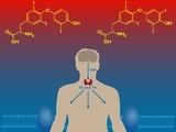 戊型病毒性肝炎