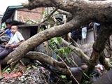 刮断的树木倒在自家门前