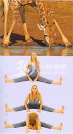 瑜伽体式:蝶式