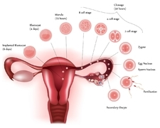 减少卵巢癌复发 我给你支招