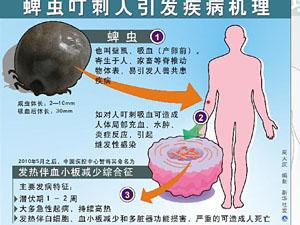 """蜱虫:揭农村公共卫生防疫的""""死角"""""""