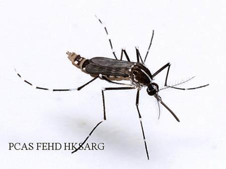 登革热袭来 灭蚊预防是关键