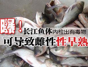 长江鱼内检出有毒物可致性早熟