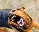 狂犬病可防不可治