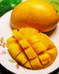 吃芒果也会得接触性皮炎吗