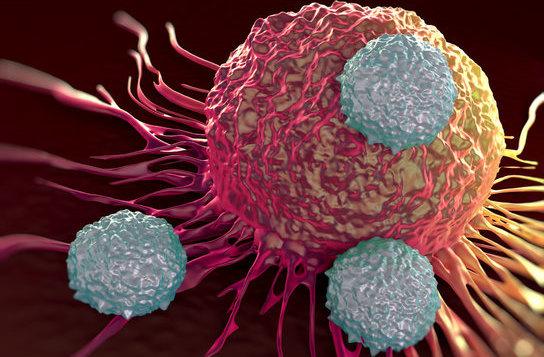 震撼!精子变胎儿(实拍组图)