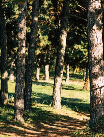 保护树木 纸品再利用