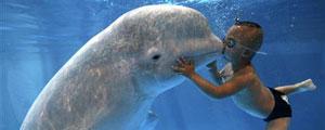 哈尔滨:白鲸治疗自闭症患儿