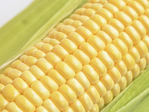 糖尿病患者少吃玉米
