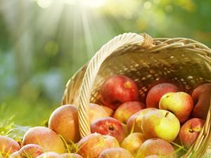 肺癌患者吃什么水果好?