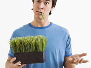 办公室绿植品种与养护要点?