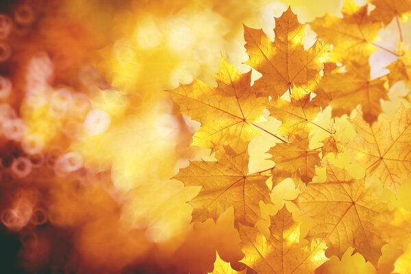 自古逢秋悲寂寥,为什么秋天容易伤感?