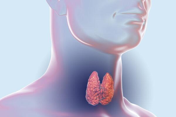 甲状腺病的主要症状有哪些?警惕这些身体异常现象!