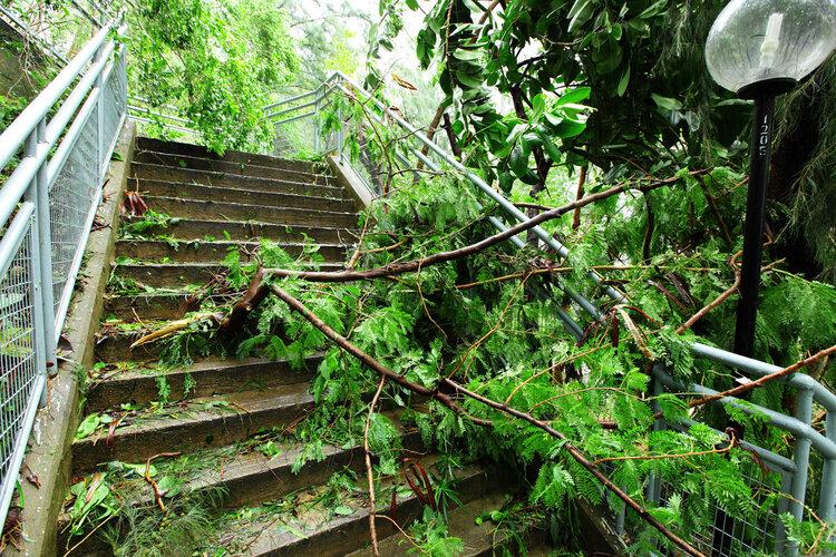 """这几种病,是台风给你留的""""伴手礼"""",很多人不在"""