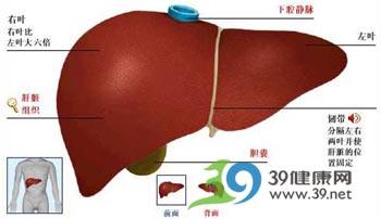 图解肝癌的种类有哪些