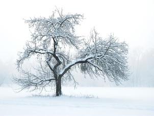 大雪节气如何养生