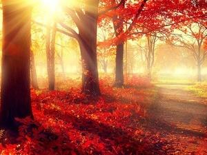 """今日秋分:""""凉燥""""来袭,温补养肺是关键"""