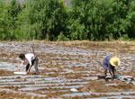 雨水节民间习俗:春耕