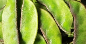 天然、植物染发剂