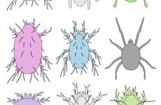 为什么吃虫子有利于人类健康和地球的未来?