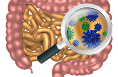日常用药会严重影响肠道菌群与身体健康