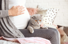 怀孕了就不能养动物吗?听听妇产科医生怎么说?