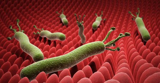 关于幽门螺杆菌的最全科普,一篇终结你所有疑问!