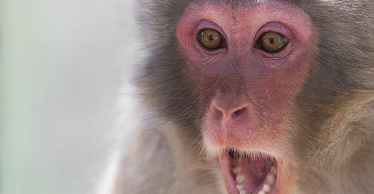"""首个""""人-猴嵌合体""""胚胎诞生!人猴嵌合"""