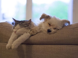 猫咪、老虎相继感染新冠病毒!家