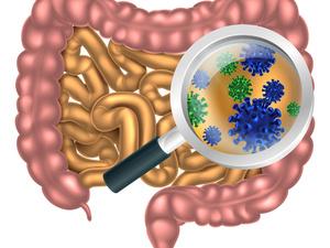 人体90%都是细菌!谈肠道健康,离不开肠道菌群