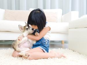 新研究!狗狗能闻出血液中的癌症,准确率高达97%