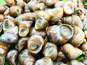 5种食物含有寄生虫,你可能经常吃,却没意识到风险