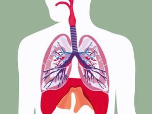 吃猪血能清肺?吃完第二天排出黑便,是排出毒素吗