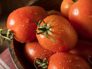 晚上吃番茄可以减肥吗 番茄减肥法一周瘦十五斤
