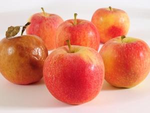可丽可心官网 7种瘦腹部水果 轻松吃出平坦小腹