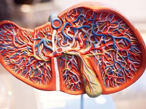 肝纤维化诊断依据