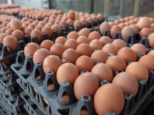 重点曝光:多批鸡蛋检出违禁药物,长期食用危害身体,良心何在?