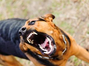 蔡少芬录节目时被狗咬伤:只要被狗咬了,必须马上打狂犬疫苗!