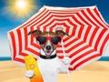 FDA:防晒霜可能有害健康,到底咋回事?