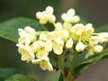 这种花做成酱料不仅美味,还能解百毒!西汉早有记载