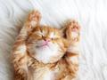 撸猫缓解老年痴呆!那么问题来了,你有猫吗?