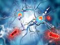 """破解:神经细胞""""身份密码""""形成之谜"""