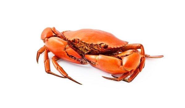 吃螃蟹中毒消息疯传 还能愉快吃螃蟹吗?