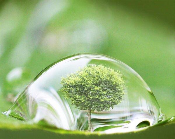 为啥要买绿化好的小区?PNAS:小区绿化好,小孩成年后精神病风险降低