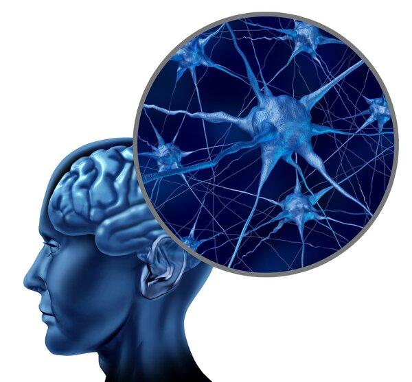 智商并非不会变 红酒咖啡可增强记忆改善智力