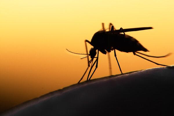 为什么蚊子爱咬你?这些人最招蚊子