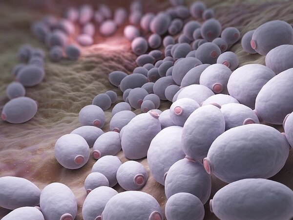 乙肝抗病毒如何选择药物?
