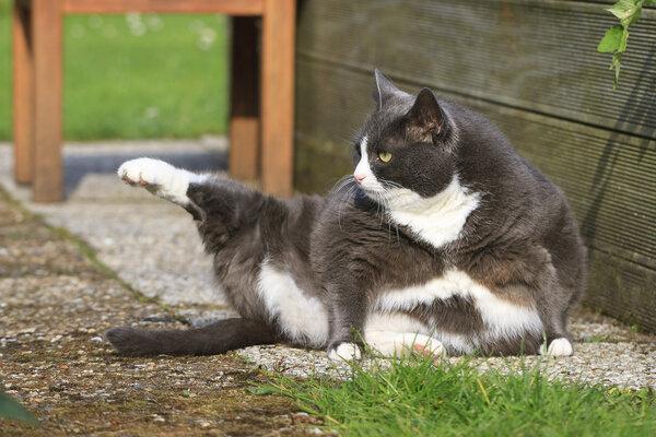 """养猫族日益壮大,患""""撸猫病"""